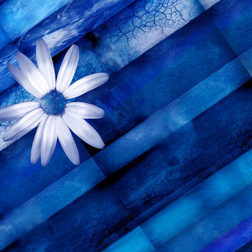White Daisy On Blue Two by Ann Powell