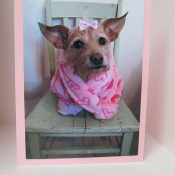 Valentine Greeting Card Dog Photo Humor Terrier by lillyzcardz