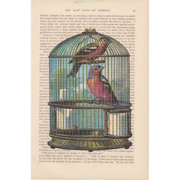 bird print BIRD CAGE color birdcage no. 3 recycled book page print