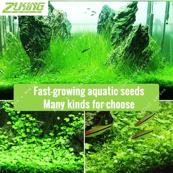 ZLKING 200-1000 Aquarium Grass Seeds Water Aquatic Plant Seeds Easy Planting Ornamental 2017 New Fish Tank Landscape Plant Seed