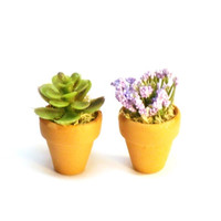 Dollhouse Miniature Plants Succulent and Purple Flowers Fairy Garden Accessories