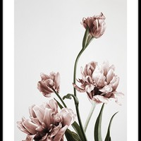 Pink Tulipe no3 Poster