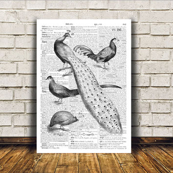 Bird art Peacock poster Wall decor Dictionary print RTA126