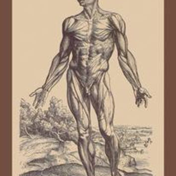First Plate of the Muscles: Fine art canvas print (12 x 18)
