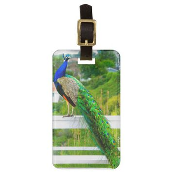 Bright blue & green peacock photo luggage tag