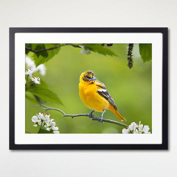 Baltimore Oriole Bird Framed Print, Nature Photography, Bird Wall Art, Framed Print