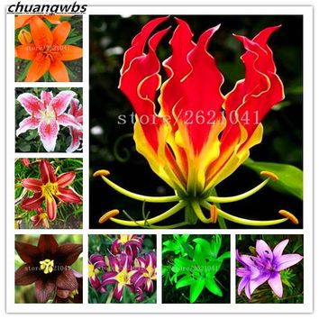 100pcs lily seeds,lily flower(not lily bulbs),lilium flower seeds,Faint scent,bonsai pot plant for home garden plants