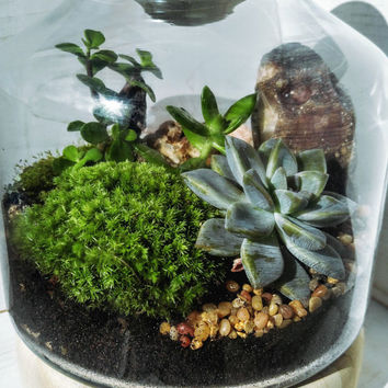 DIY Large glass and wood terrarium kit