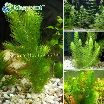 Promotion!!! 500 seeds mixed aquarium fish tank grass seeds water Aquatic plant seed Free shipping