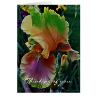 Peach Green Pink Yellow Iris Generic Note Cards