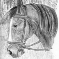 Listening Beauty Horse Pencil Drawing Print 8 x 10