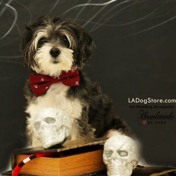 Burgundy dog Skull bow tie attached to dog collar, Halloween pet accessory