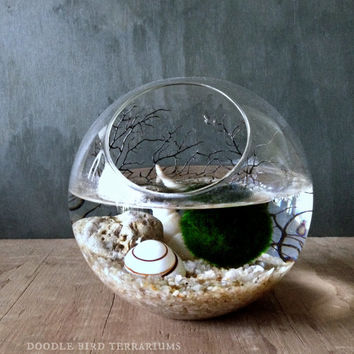 Ecosphere Moss Ball Orb / Aquarium Moss Bowl Biosphere Kit