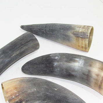4 Cow horns...E4B68....Raw, unfinished cow horns...........ox horns