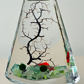 Marimo Terrarium // Japanese Moss Ball Aquarium // Sea Fan // Sea Glass  // Green Gift // Home Decor