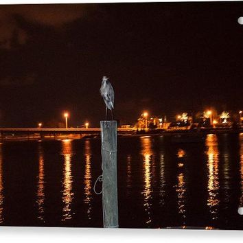 Blue Heron Night - Acrylic Print