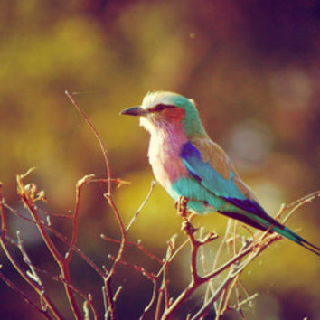 Lilac Breasted Roller Art Print by Emma.R | Society6