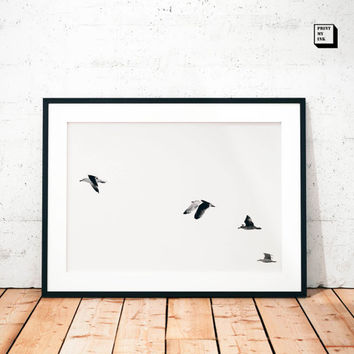 seagulls photography, flock of birds, seagulls print, seagulls photo, seagulls wall print, nautical, black and white, seaside, ocean, modern