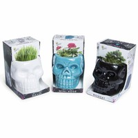 skull plant kits | Five Below