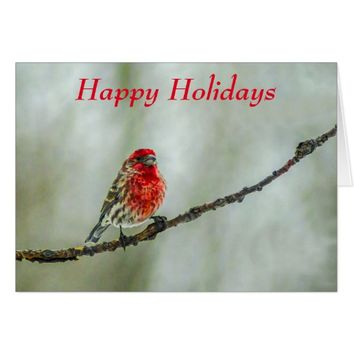 "Purple Finch Red Bird ""Happy Holidays"" Card"