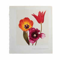 Vintage 1967 Three Tulips by Irving Penn 1st Impression 1980s Photography Museum Book Art Plate Tender Still Life  Salon Spa Office