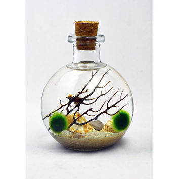 Bottle Terrarium - Marimo - Japanese Moss Ball Aquarium - cork topped glass bottle  - sea fan - shells