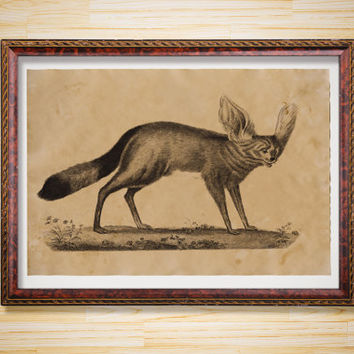 Antique decor Fox with big ears print Animal poster