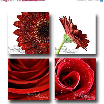 Floral Prints Set of Four Fine Art Photography Home Decor Wall Collage Daisy Gerbera Red Rose White MARKED DOWN 50% OFF