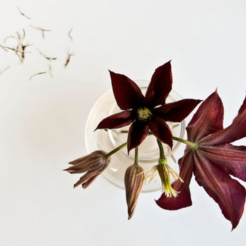 Clematis Life Stages Photo, Nature Photography, Flower, Floral Still Life Metallic Print