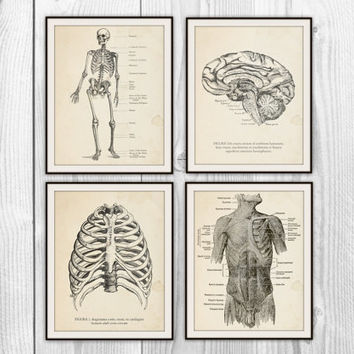 Vintage Anatomy Quad - Set of 4 Art Prints - Antique Human Figures - Scientific Anatomical Book Art