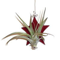 Stained Glass Star Air Plant Holder, Red Stained Glass Plant Holder