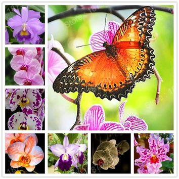 Rare Bonsai Orchid flower seeds in balcony butterfly  Orchid flower pot seeds Beautiful Garden flower Seed mix 24 colors 300pcs