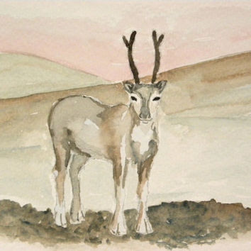 Reindeer in Lapland, Finland. Original watercolor painting. Unique Christmas card or home decorative painting.