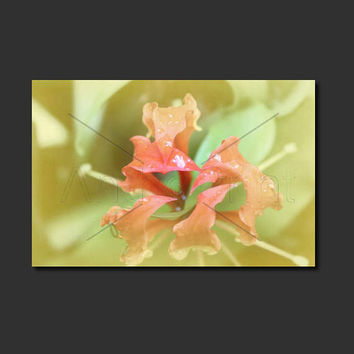 Red Flower Wall Art Nature Canvas. Botanical Canvas Print of Flower. Art for Living Room. Noosa Botanical Photo. Anthotype Process.