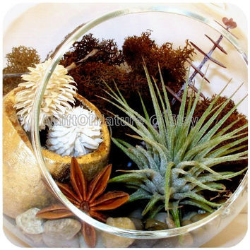 AIR PLANT TERRARIUM Kit, Hanging Glass Orb, Tillandsia Airplant Woodland Treasures Glass Globe, Birthday Gift Housewarming Gift Boss Gift