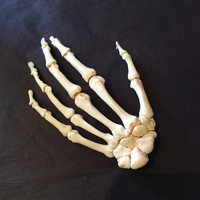 Articulated Left Human Hand