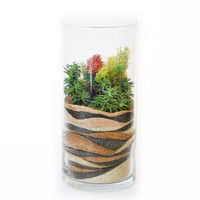 HonestlyWTF Sand Art Sedum Terrarium DIY Kit / One-Time Purchase (Spring)