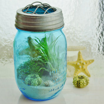 Beach in a Bottle ~ Blue Mason Jar Air Plant Terrarium ~ Ball Jar and Lid ~ Home/Office Decor ~ Gift Idea