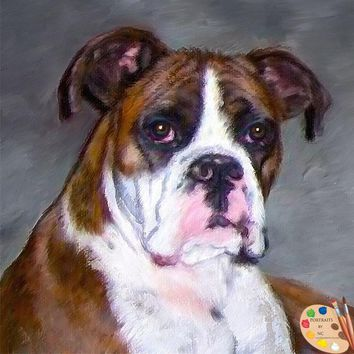 Boxer Dog Portrait 438