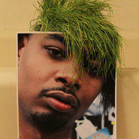 DANNY BROWN WHEATGRASS plant Dormroom Accessories by BSTJ on Etsy