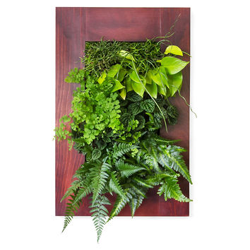 """24"""" Cherry Wall Mounted Planter, Seeds & Growing Kits"""