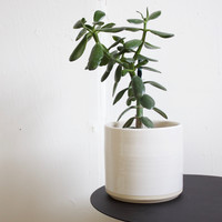 "Ceramic 7"" Planter, White / Natural Rim"