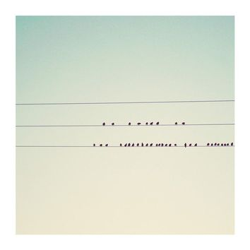 birds on wires photograph  whimsical fine art by oohprettyshiny