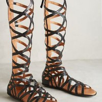 Gentle Souls Tarara Gladiator Sandals Black
