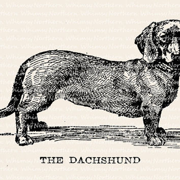 Dachshund Dog Illustration - Vintage Animal Clip Art Image – Digital Stamp - Printable Transfer Graphic – instant download clipart - CU OK