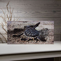 BABY SEA TURTLE CANVAS