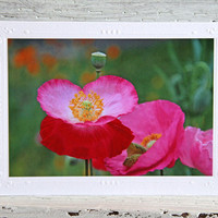 Pink Poppies Photo Greeting Card, Wildflowers Photo Print, Fine Art Photography, Notecard for Gardeners and Nature Lovers, Birthday Card