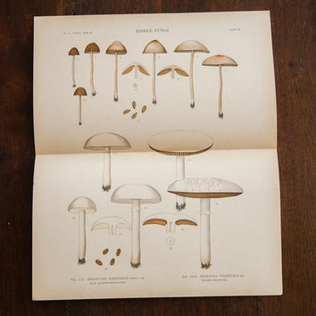 Large Edible Mushrooms Fungi Plate 86