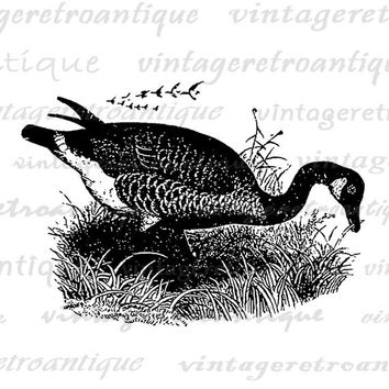 Goose Digital Graphic Printable Download Bird Image Illustration Antique Clip Art for Transfers Printing etc HQ 300dpi No.4247