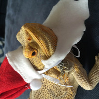 Handmade Felt Santa Beard & Hat Costume for Bearded Dragons